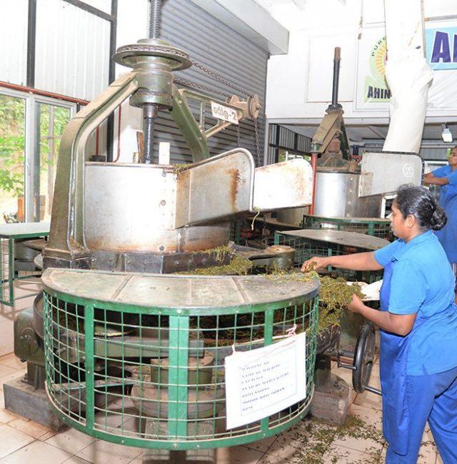 Ahinsa Tea Factory