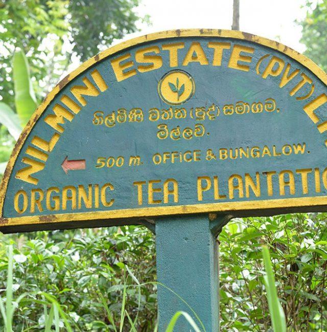 Nilmini Estate